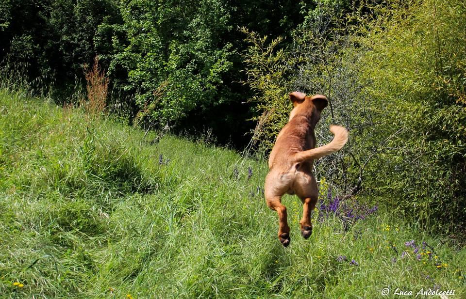 Bufalo, cane ospite del B&B Eremo Gioioso
