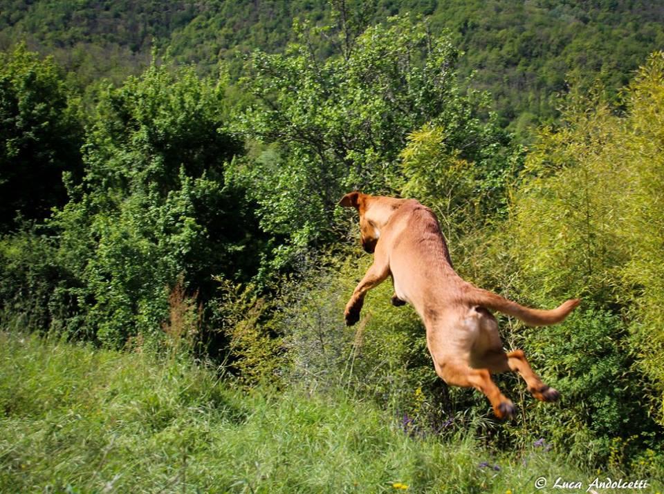 La felicità di un cane in vacanza in Lunigiana